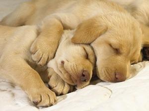 puppy_122607